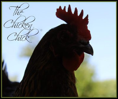 Flock Focus Friday at The Chicken Chick®
