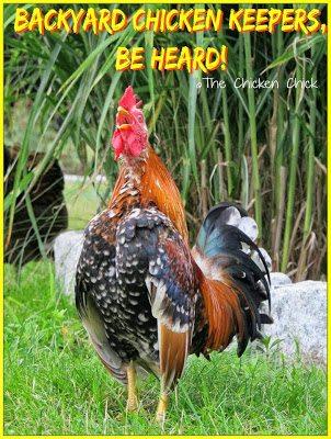 Backyard Chicken Keepers, Be Heard!