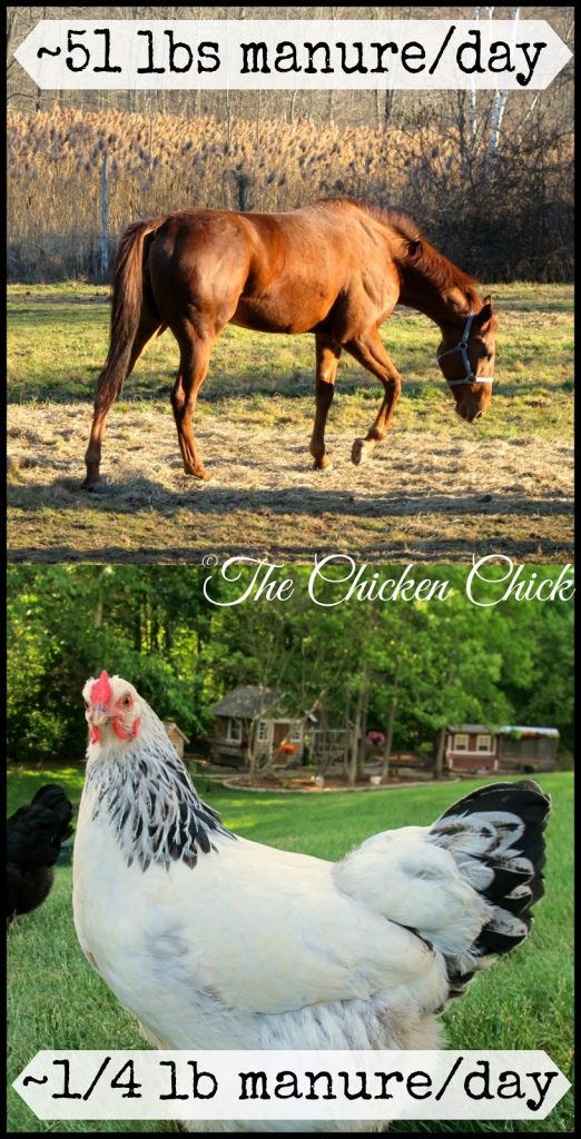 The Chicken Chick's Sweet Coop® zeolite can absorb approximately 40-50% of its weight in moisture. A 1,000 pound horse produces approximately 51 lbs of manure (feces plus urine) per day. The average laying hen produces approximately 1/4 lb of manure per day. If horse keepers swear by Sweet PDZ for its superior moisture and odor control, chicken keepers would be wise to use it to their advantage as well.