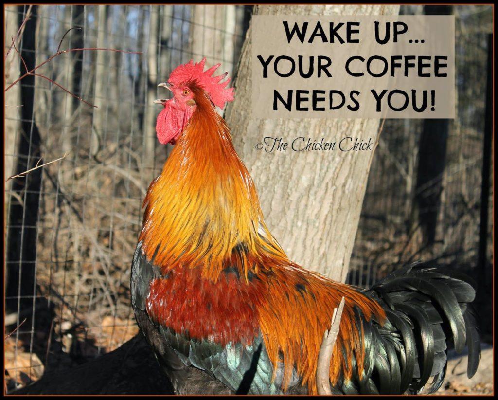 Wake up...your coffee needs you!