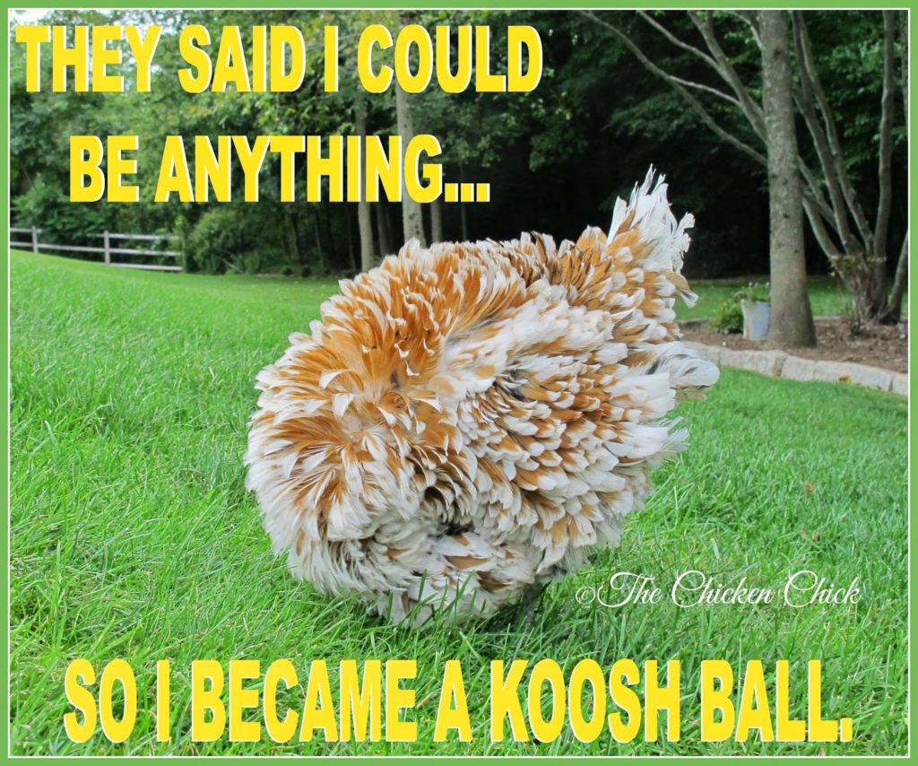 They said I could be anything...so I became a Koosh ball.