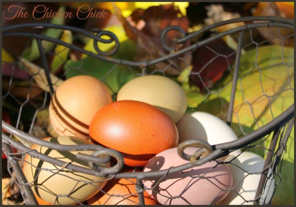Autumn egg basket