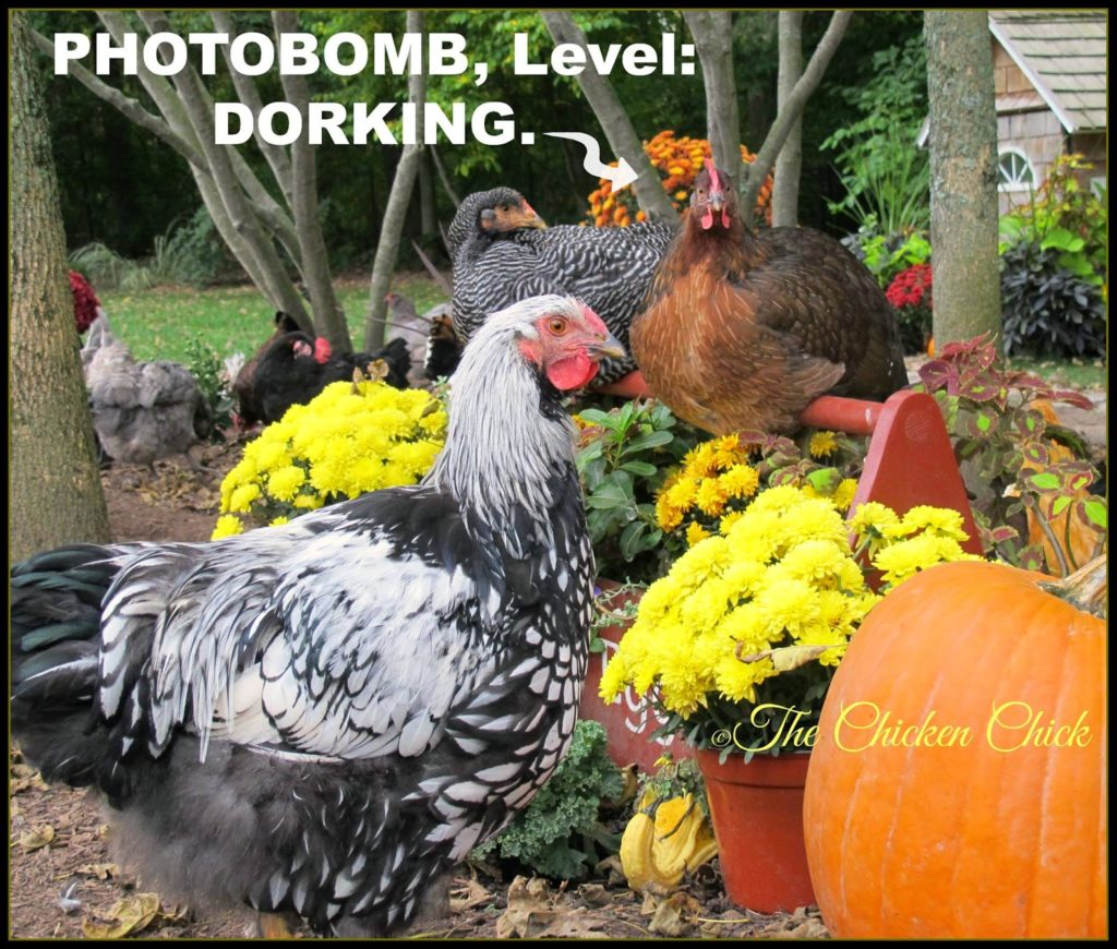 Photobomb, Level: Dorking