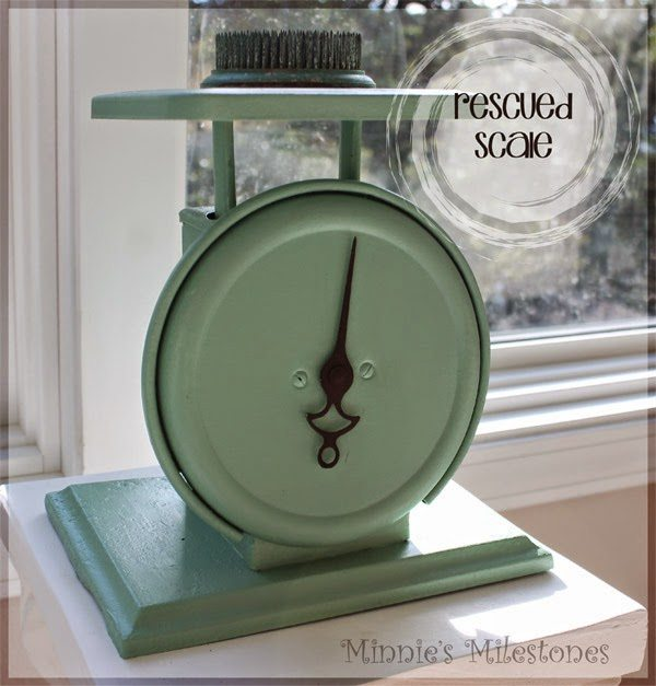 Rescued Scale, shared by Minnie's Milestones