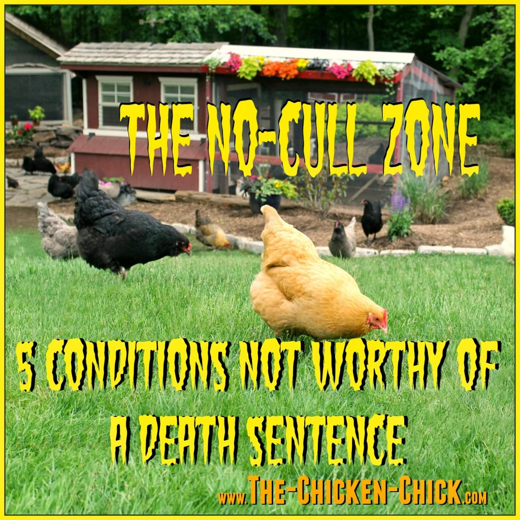 """""""Culling"""" technically means to eliminate or remove from the flock, but the term is often used as a sanitized synonym for """"kill."""" However, for most chicken-keepers, culling is considered the last resort and making a beloved pet the guest of honor at the dinner table, unthinkable."""