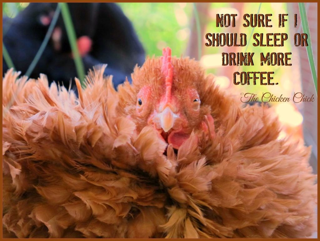 Not sure if I should sleep or drink more coffee. via The Chicken Chick®