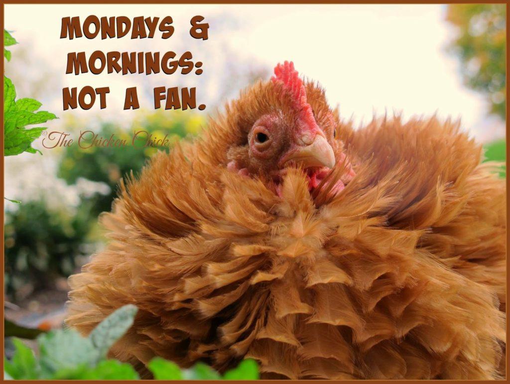 Mondays & mornings- not a fan.