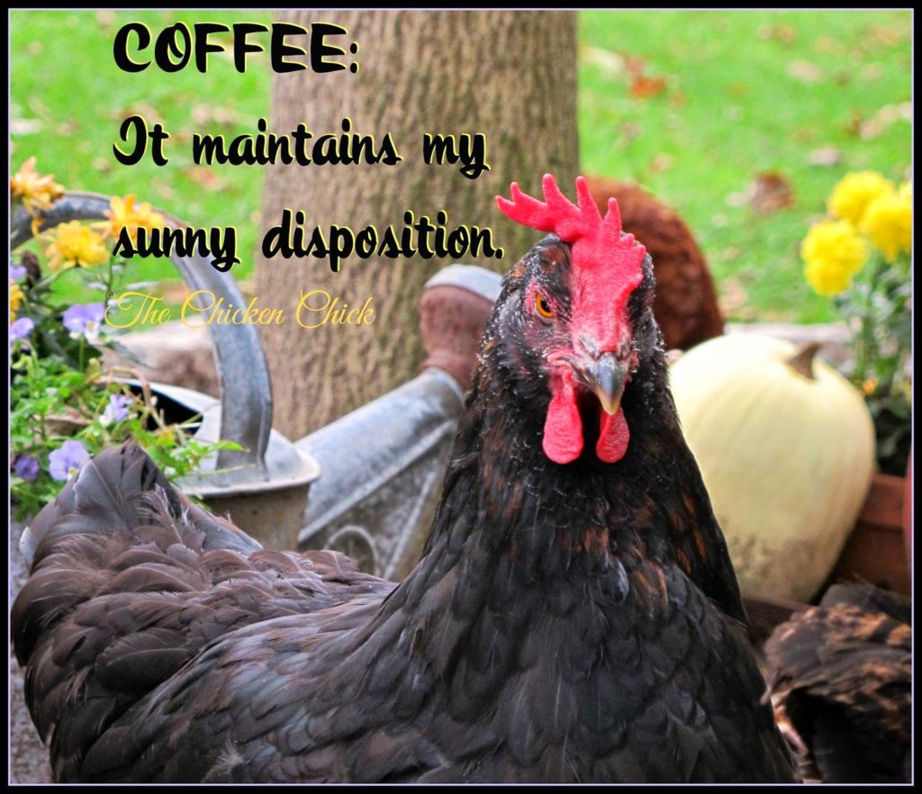 Coffee: It maintains my sunny disposition.