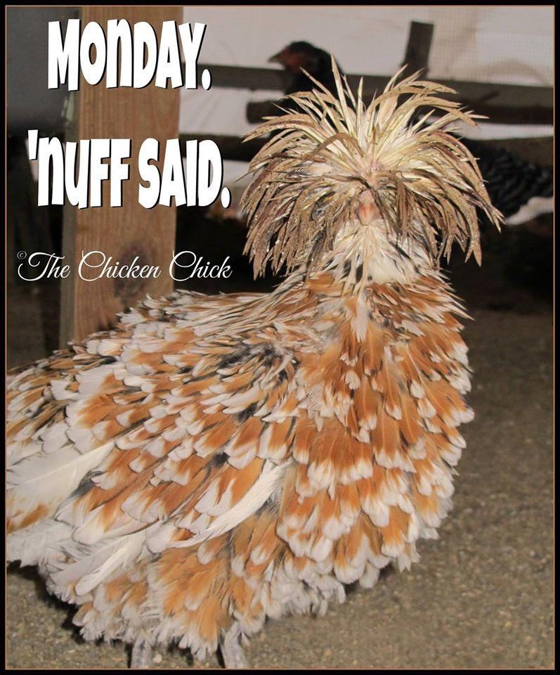 Monday, 'nuff said.