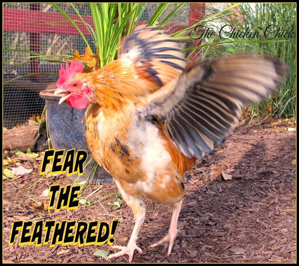 Fear the feathered!
