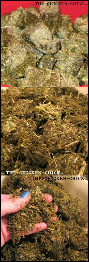 Dehydrated, chopped alfalfa is an excellent source of supplemental protein for poultry. While it contains 17-20% protein, it should only be fed in small amounts occasionally. *Alfalfa should not exceed 5% of a laying hen's daily diet for reasons beyond the scope of this article. *Alfalfa is a good source of carotenoids for chickens, which makes the yolks more vibrant. *Alfalfa is a plant in the legume family. (who knew?) *Since it is high in dietary fiber, it moves through the digestive tract slower than other feed ingredients.
