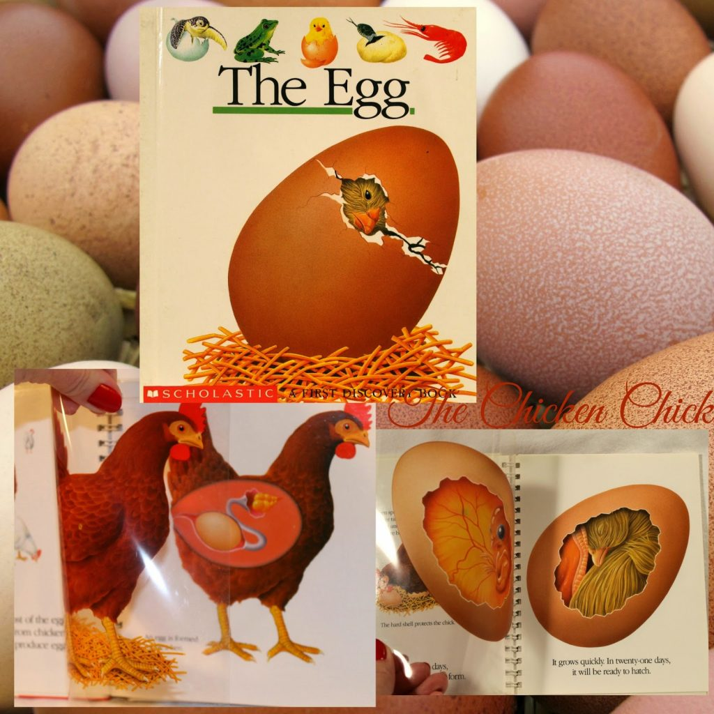 The Egg- a children's book
