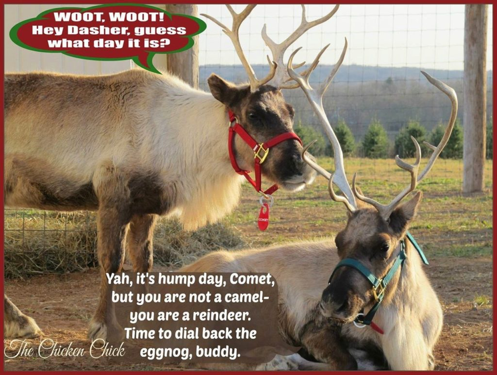 Woot, Woot! Hey Dasher, guess what day it is?