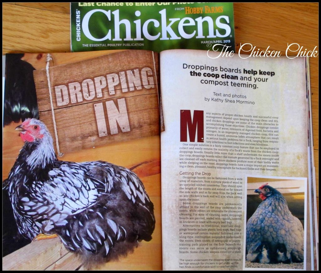 Sylvio and Iris made it to the cover of my article in Chickens Magazine this month!