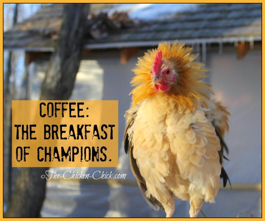 COFFEE: The breakfast of champions.