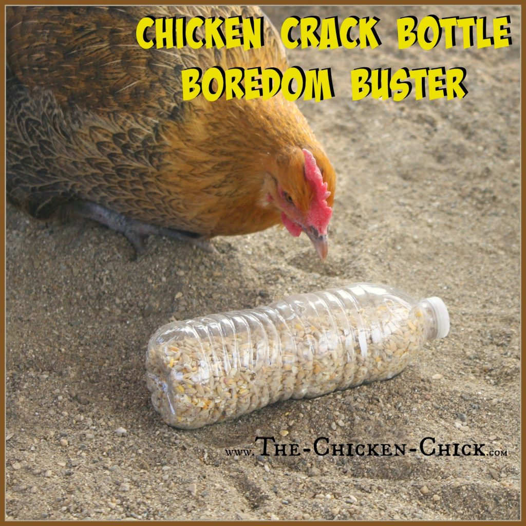 20 Winter Boredom Busters For Backyard Chickens The
