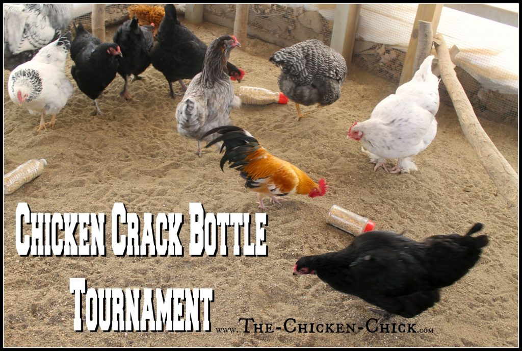 "CHICKEN CRACK BOTTLES Use a 1/2"" drill bit to drill holes in empty plastic bottles, add chicken scratch (aka: chicken crack) and watch the fun break out! Provide several bottles to the flock at once to avoid conflict & fowl penalties."