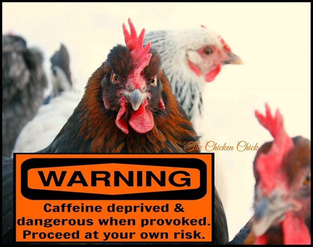 Warning: Caffeine deprived & dangerous when provoked. Proceed at your own risk.