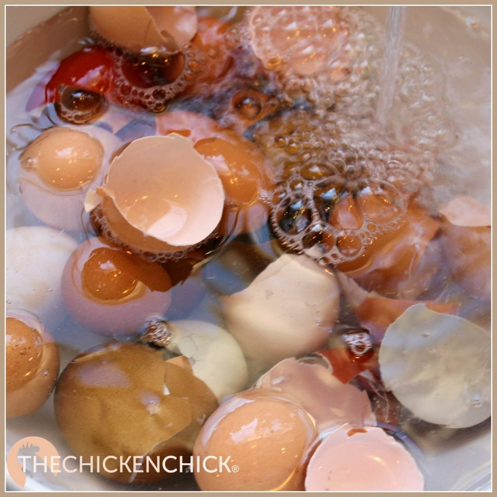 Eggshells can be washed, air-dried, crushed lightly then mixed into the oyster shell container.