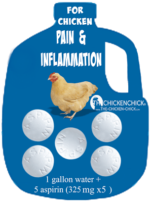 As long as there are no internal injuries, an aspirin drinking water solution can be offered to an injured chicken for a maximum of three days. Add 5 aspirin tablets (325 mg x5) to one gallon of water.