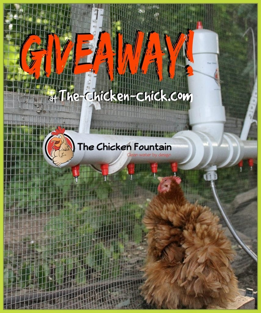 Giveaway of The Chicken Fountain at www.The-Chicken-Chick.com
