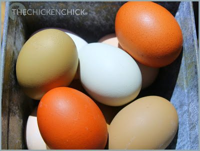 Eggs. ~The Chicken Chick®