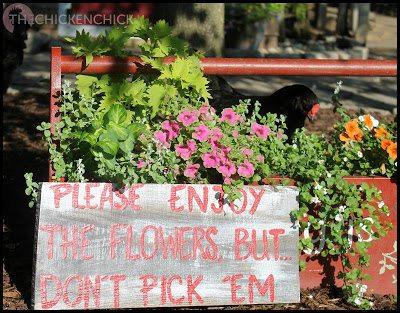 Please enjoy the flowers, but don't pick'em.