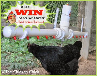 The Chicken Fountain Giveaway at The-Chicken-Chick.com