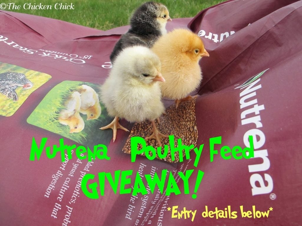 Nutrena Feed Giveaway at www.The-Chicken-Chick.com