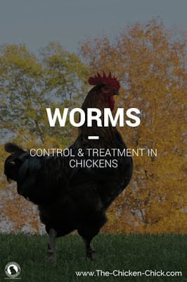 Worms | Control & Treatment of Worms in Chickens including medication dosage information.