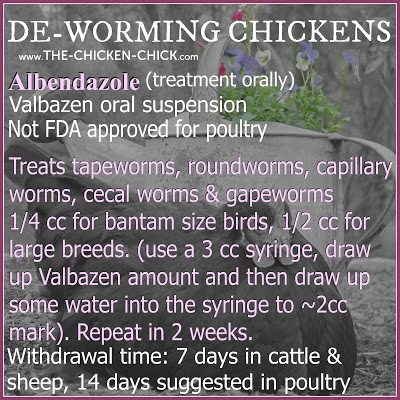 Worms | Valbazen Drench, treats tapworms, roundworms, capillary worms, cecal worms & gapeworms. Oral dosages: 1/2 cc for large breeds, 1/4 cc for bantam sized birds. Use a 3cc syringe, draw up Valbazen dosage and then draw up some water into the syringe to approximately the 2cc mark for oral administration or soaked into bread and fed to birds individually.