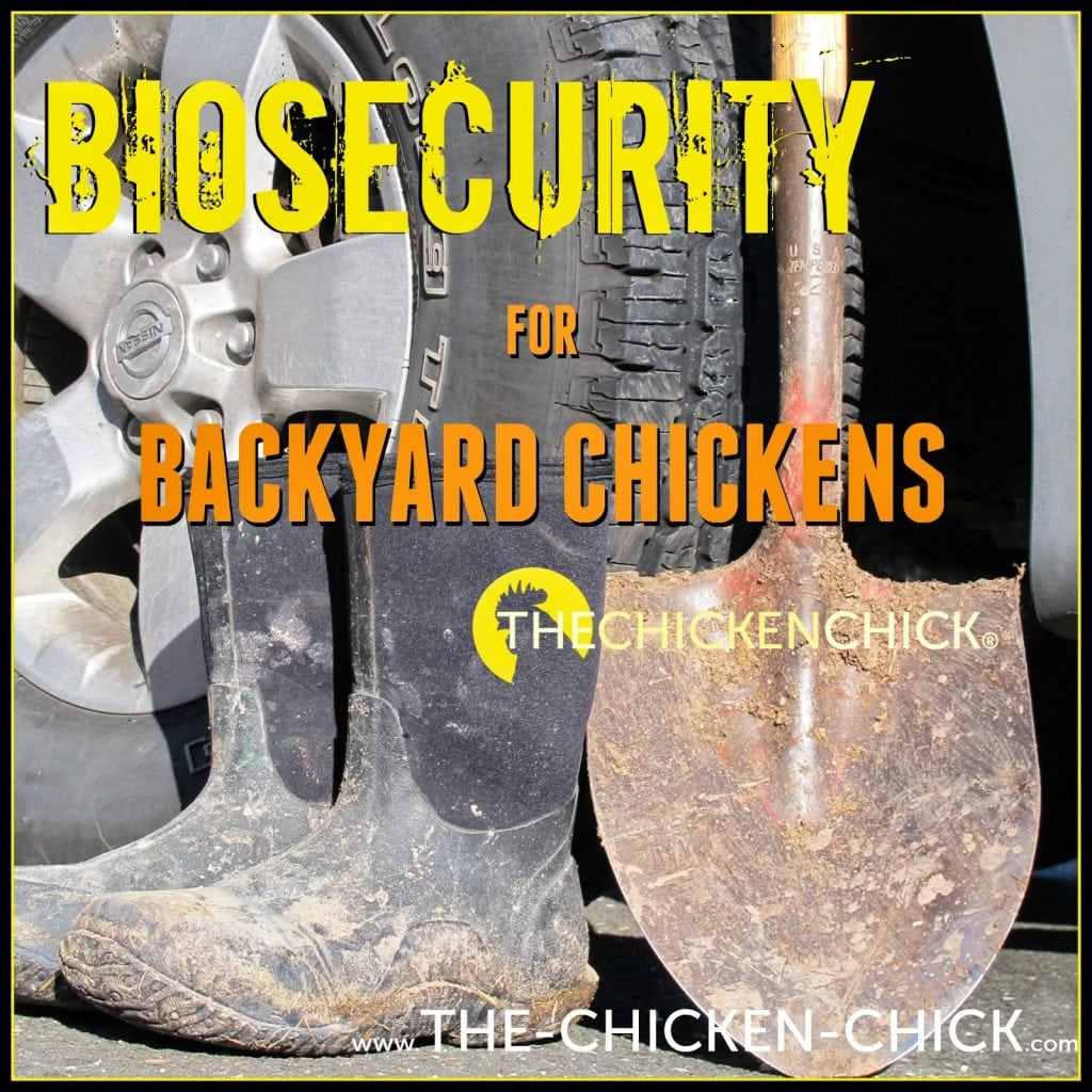 Practicing good biosecurity limits the risk of bird flu spreading.