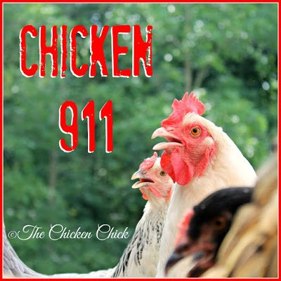 Find basic guidelines to follow when caring for a sick chicken without a vet HERE.