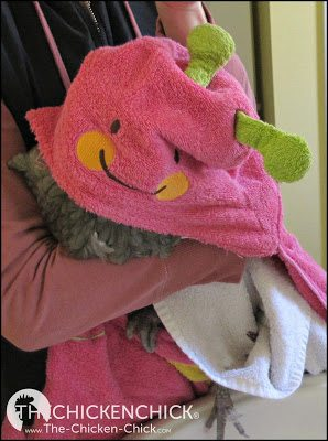 loosely wrapping a bird in a towel, covering its head and eyes while ensuring ample breathing room keeps a bird immobilized, safe and calm.
