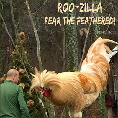 Roo-zilla: Fear the Feathered!