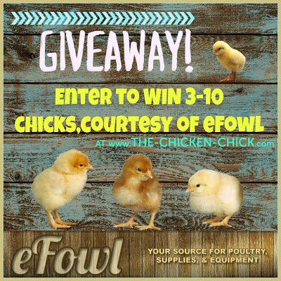 eFowl Chick Giveaway at The Chicken Chick®