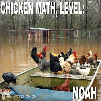 Chicken math, Level: NOAH.