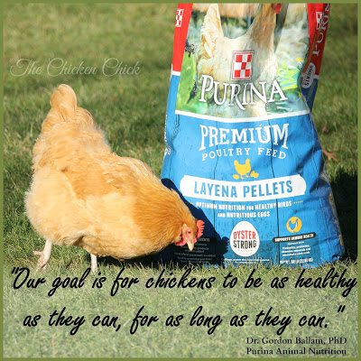 The take-home message: if you feed your flock Purina® Layena® with Oyster Strong™, it contains all the calcium they need. If you don't feed your flock Layena®, be sure to offer them large pieces of oyster shell free-choice. Eggshells offered with oyster shell are fine, but are not a sufficient source of supplemental calcium by themselves.