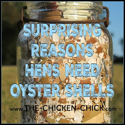 The Surprising Reasons Hens Need Oyster Shells