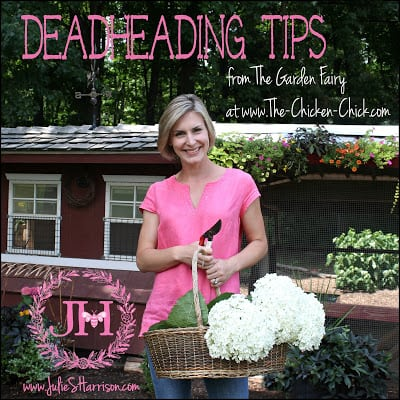 Pro Tips from The Garden Fairy at The Chicken Chick®: Deadheading