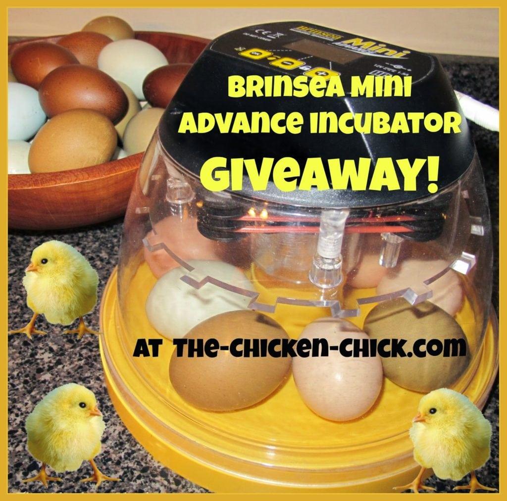 Brinsea Mini Advance Incubator Giveaway at The Chicken Chick®