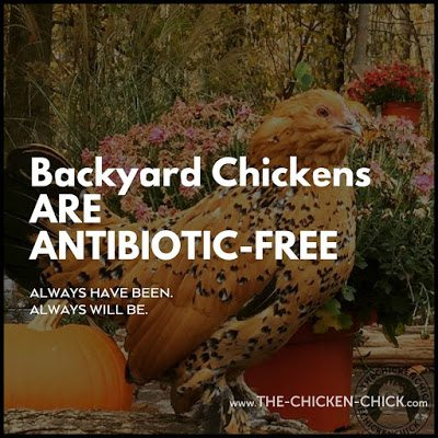 """Chicken keepers should not be shamed into avoiding antibiotic use when medically necessary as determined by a veterinarian for fear of being judged by some contrived standard of what is """"natural."""""""
