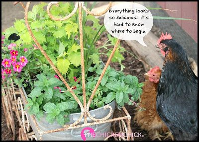 Gardening with Chickens books, The Chicken Chick®
