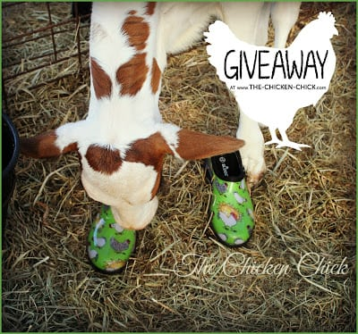 Sloggers chicken print shoes GIVEAWAY at www.The-Chicken-Chick.com