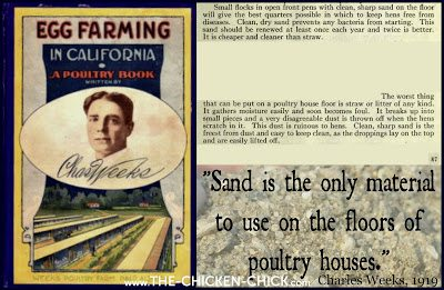 """Poultry visionary, Charles Weeks wrote of the benefits of sand as chicken litter in his 1919 book, """"Egg Farming in California,"""" in which he stated: """"Sand is the only material to use on the floors of poultry houses. Clean, dry sand prevents any bacteria from starting. Clean, sharp sand is the freest from dust and easy to keep clean, as the droppings lay on top and are easily lifted off."""""""