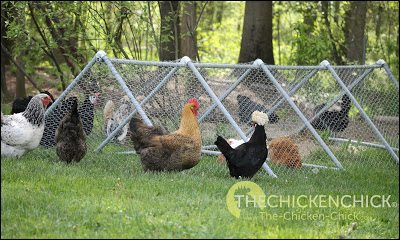 A playpen tractor is a temporary, daytime confinement facility located in the chicken yard. It is not predator-proof and is not intended to house chickens at night.