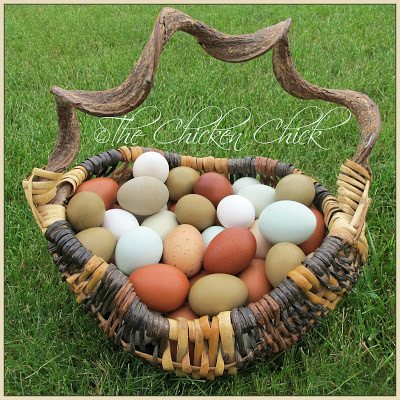 Handling and Storage of Fresh Eggs from Backyard Chickens