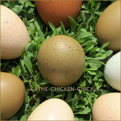 Hens do seem to enjoy rearranging nesting material, but its function is protecting eggs, not entertaining the hens.