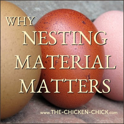 Most of us never think about the purpose of nest box material for our backyard chickens, but the topic deserves some consideration because most of us are getting it wrong.