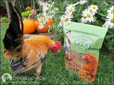 Adding colorful, aromatic dried herbs and flowers to a nest box is a fun way to spruce up the coop, but beware of misleading claims that herbs tossed inside the coop or grown around it offer a wide array of beneficial properties that they do not provide.